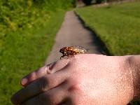 cicada on my hand