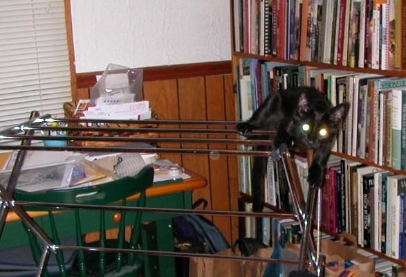 Luna on the laundry rack
